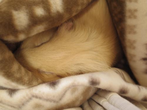 今年の毛布5