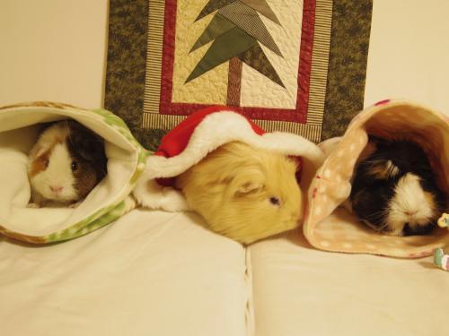 Merry Christmas 2015 3