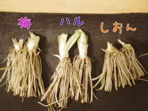 春の草11