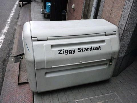 ziggy3.jpg