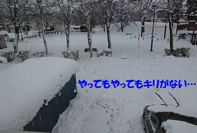 11月の大雪うり4