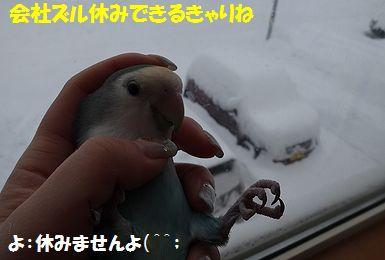 大雪うりまろ
