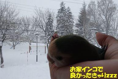 大雪うりまろ2