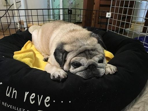 お犬ベッド