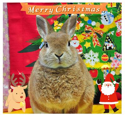 2015クリスマスこてつ