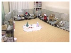 クリスマス部屋