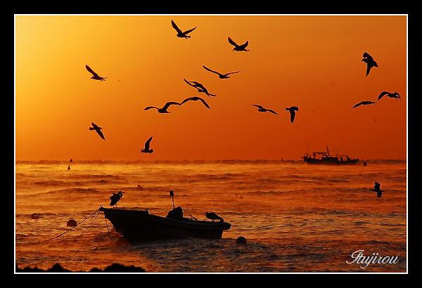 漁船に群がる