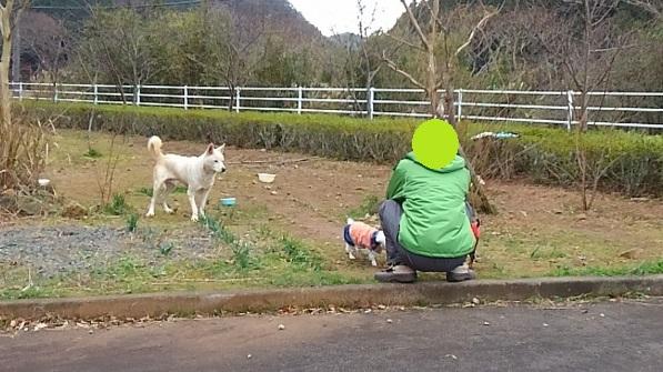 下田のワンコ