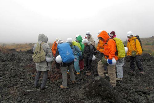 溶岩の上で発芽したイタドリ