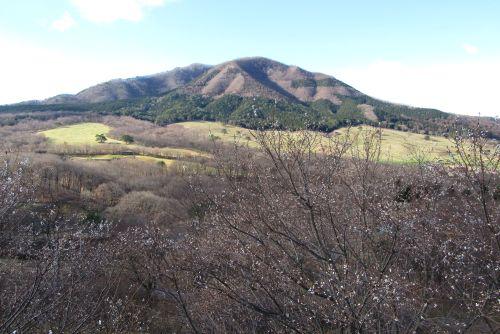 ジュウガツザクラと小野子山