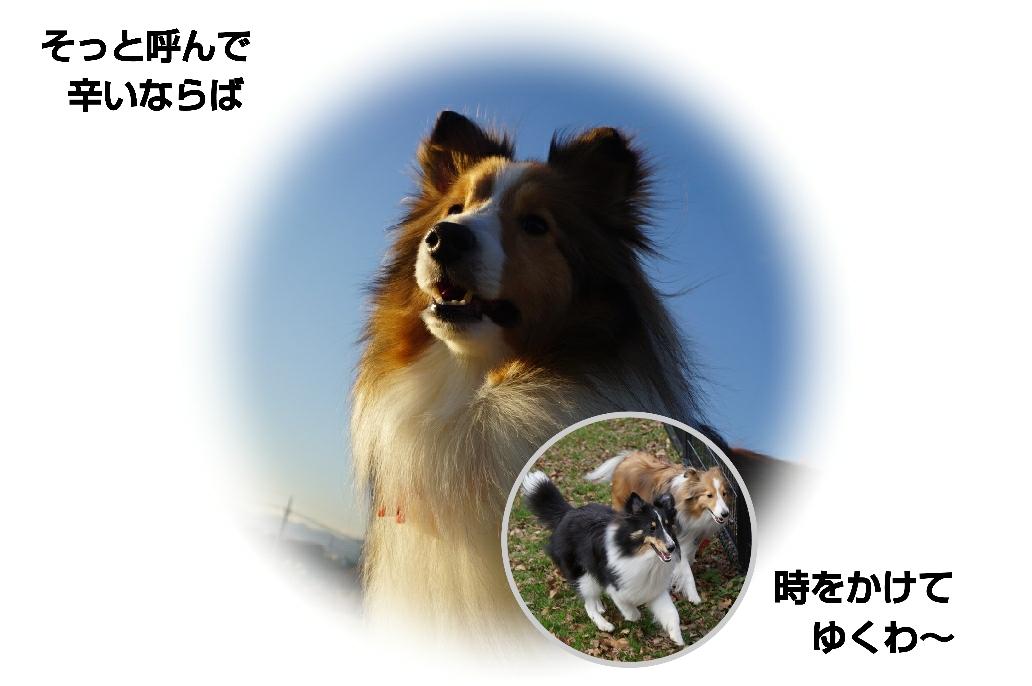 16-01-07-01-46-45-885_deco.jpg