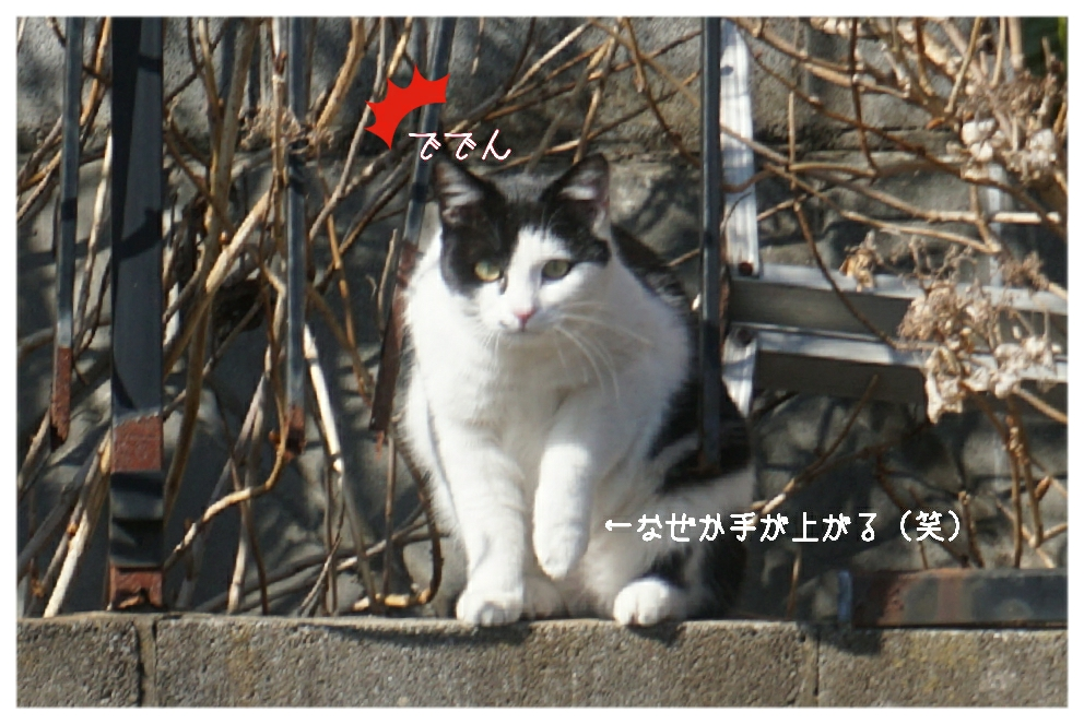 16-02-02-15-11-48-730_deco.jpg