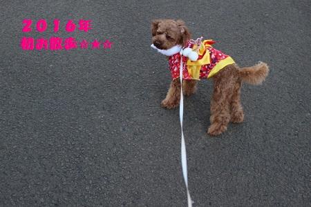 2016年お散歩 - コピー