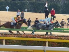 レース:ピッツネイル