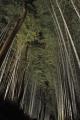 ④嵯峨野の竹林