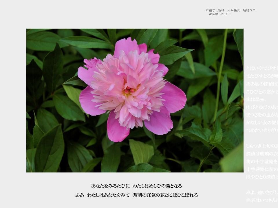 CER ブログ 2015-12 1