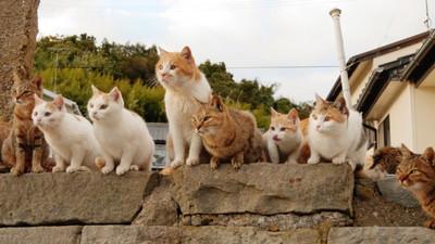 013Aoshima- Cat Island [Ehime]