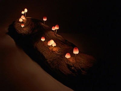 Mushroom-lamps-make-your-bedroom-enchanting-at-night10-830x623.jpg