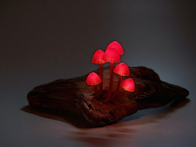 Mushroom-lamps-make-your-bedroom-enchanting-at-night7-830x623.jpg