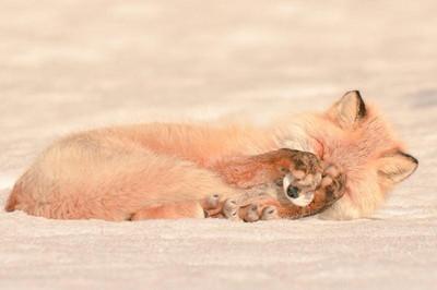 cute-animals-hokkaido-ezo-japan-12.jpg