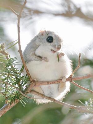 cute-animals-hokkaido-ezo-japan-22.jpg
