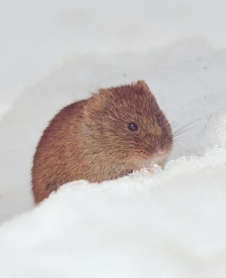 cute-animals-hokkaido-ezo-japan-32.jpg