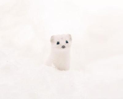 cute-animals-hokkaido-ezo-japan-34.jpg