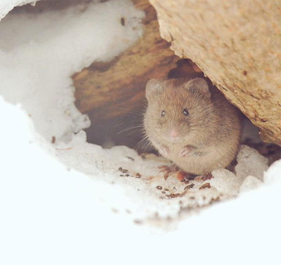 cute-animals-hokkaido-ezo-japan-44.jpg