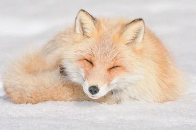 cute-animals-hokkaido-ezo-japan-5.jpg