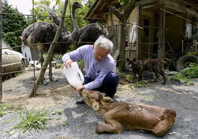 fukushima-radioactive-disaster-abandoned-animal-guardian-naoto-matsumura-13.jpg