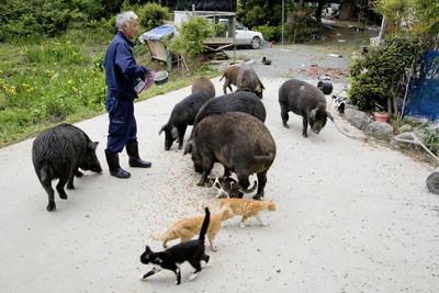 fukushima-radioactive-disaster-abandoned-animal-guardian-naoto-matsumura-14.jpg
