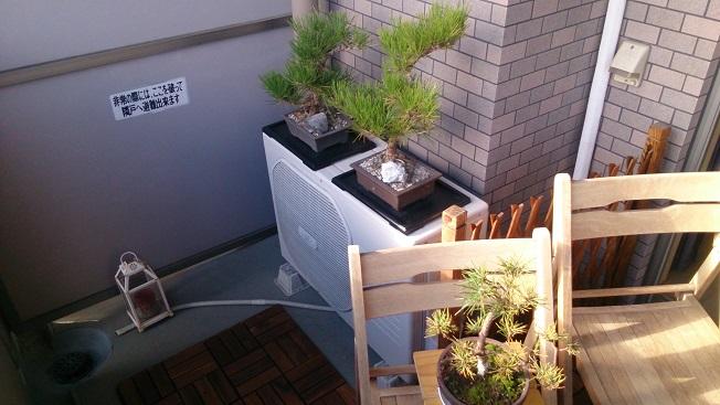 盆栽旧置き場