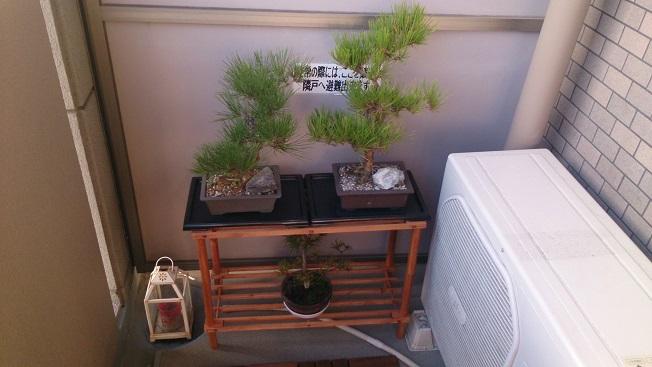 盆栽新置き場