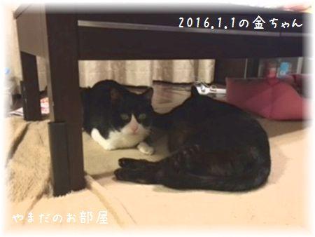 2016.1.1の金ちゃん②
