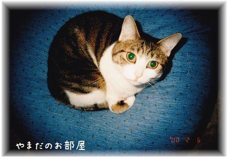2000.2.6のスーちゃん