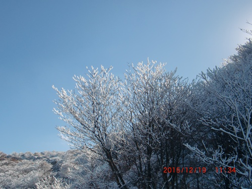 004 霧氷①