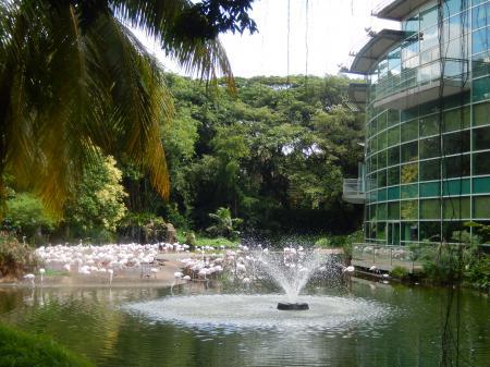 シンガポール2015.12ジュロンバードパーク