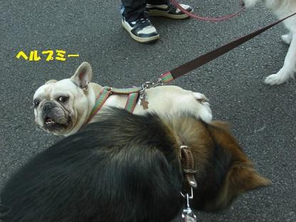 CIMG7700.jpg