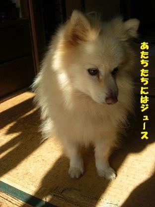 CIMG7875.jpg