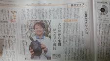 東京新聞夕刊、カメQと。