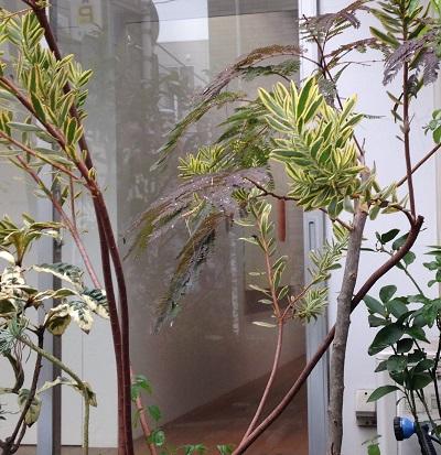 20151205植物の向こう