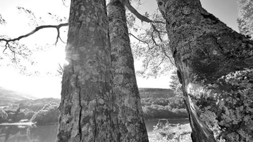 木2モノクロ