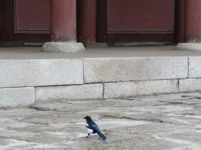 2015年11月14日 景福宮 鳥