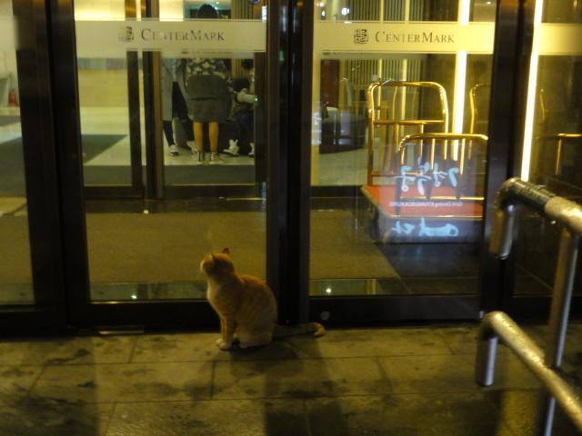 2015年11月16日 センターマークホテル前のニャンイ1
