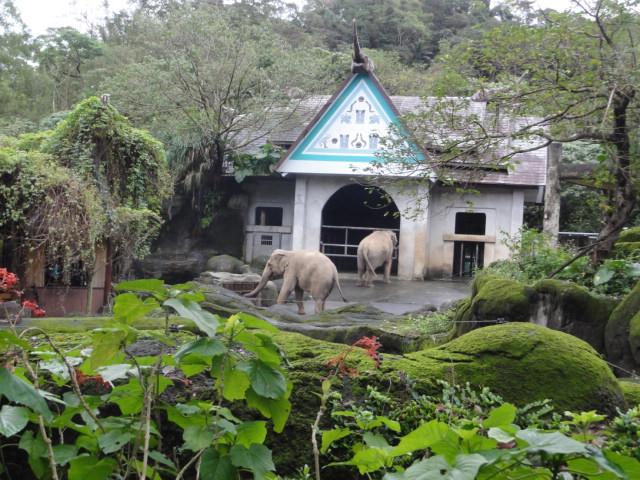 2016年1月22日 台北市立動物園 象