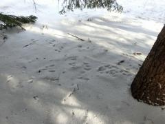 木の下の足跡