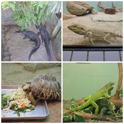 自然動物館