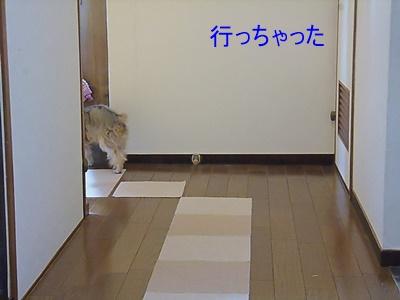 P1160547.jpg