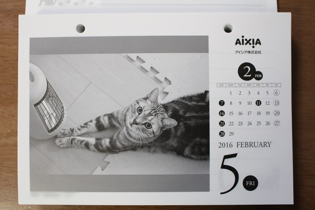 2016年極楽ねこカレンダー(アイシア株式会社様)掲載
