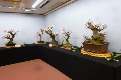 第65回 長浜盆梅展(mt.okuho)